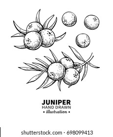 Juniper drawing. Isolated vintage illustration of berry on branch. Organic essential oil engraved style sketch. Beauty and spa, cosmetic ingredient. Great for label, poster, flyer, packaging design.