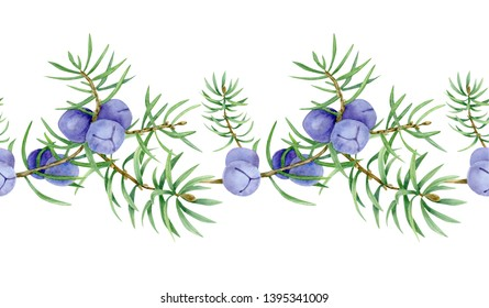 Juniper. Seamless pattern of juniper berry on branch. Organic essential oil. Beauty and spa, cosmetic ingredient. Great for label, poster, packaging design.