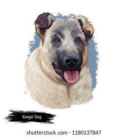 Kangal Dog, Kangal Shepherd Dog, Sivas Kangal, Turkish Kangal, Anatolian Shepherd dog digital art illustration isolated on white background. Turkey origin guardian dog. Pet hand drawn portrait