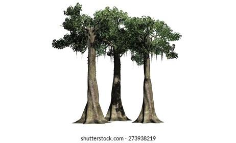 Rainforest Trees Images Stock Photos Vectors Shutterstock