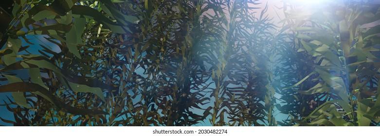 kelp forest, giant brown algae seaweed, background banner (3d nature render)