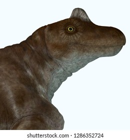Keratocephalus Dinosaur 3D illustration - Keratocephalus was a primitive herbivore dinosaur that lived in South Africa during the Permian Period.