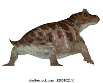 Keratocephalus Dinosaur Tail 3D illustration - Keratocephalus was a primitive herbivore dinosaur that lived in South Africa during the Permian Period.