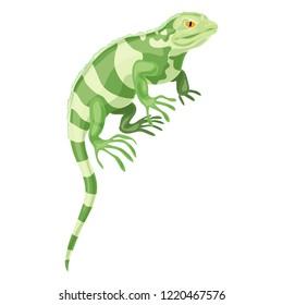 Khameleon reptile icon. Cartoon of khameleon reptile icon for web design isolated on white background
