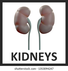 Kidneys infographic. Anatomical icon of kidneys on white background.3d Illustration.