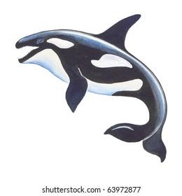 Killer Whale Cartoon Images, Stock Photos & Vectors ...