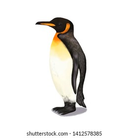 King Penguin animal realistic illustration