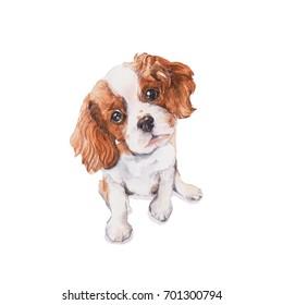 King-charles dog. Watercolor painting.