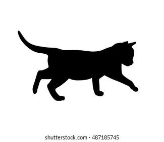 Kitten black silhouette on white background.
