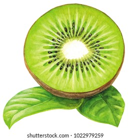Kiwi painted with watercolor on white background