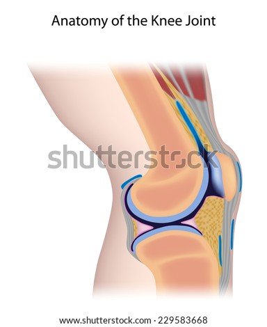 Royalty Free Stock Illustration of Knee Joint Anatomy Unlabeled ...