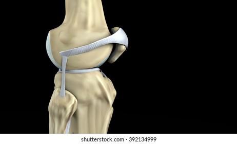 knee rear projection