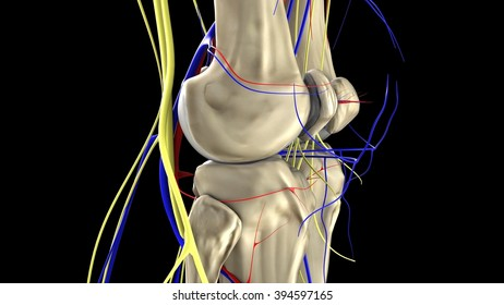 knee, side view