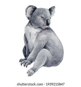 Koala bear watercolor illustration. Australia symbol cute koala bear. Native australian animal bear sketch hand-drawn. Grey wild australia endemic furry animal. On white background