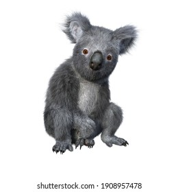 Koala sitting and looking at camera. 3d render isolated on white background.