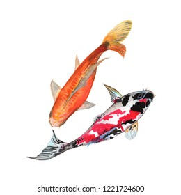 Koi Carp fish Watercolor painting isolated. Watercolor hand painted Koi Carp fish illustrations. Koi Carp fish isolated on white background