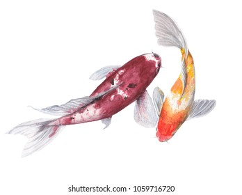 Koi Carp Watercolor painting. Watercolor hand painted cute animal illustrations.