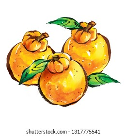 Korean Fruit Hallabong with Watercolor Painting