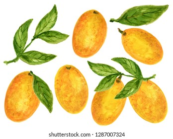 Kumquat Orange Watercolor Gouache illustration Citrus fruit branch orange isolated on white background hand paint