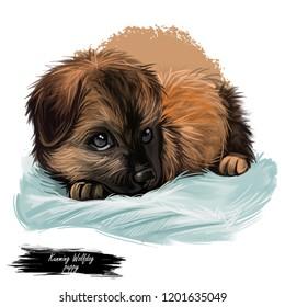 Kunming Wolfdog Images Stock Photos Vectors Shutterstock Kunming wolfdog information including pictures, training, behavior, and care of kunming wolfdog and dog breed mixes. https www shutterstock com image illustration kunming wolfdog chinese dog digital art 1201635049