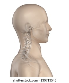 Kyphotic spine in cervical region phase 1
