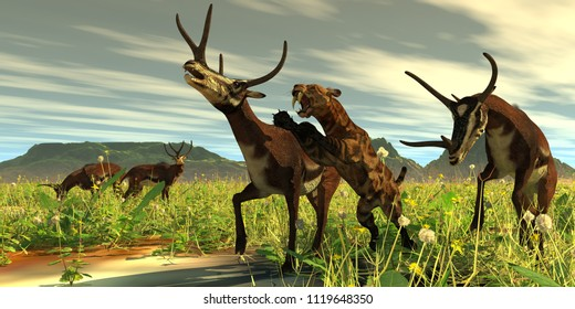 Kyptoceras attacked by Saber-toothed Cat 3D illustration - A Saber-toothed Cat comes out of high vegetation to attack a Kyptoceras deer during the Pleistocene Period.
