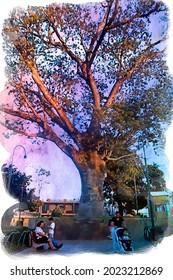 La Ceiba Antiguo Cuscatlán. National tree of El Salvador