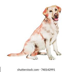 Labrador Retriever Dog illustration in watercolor