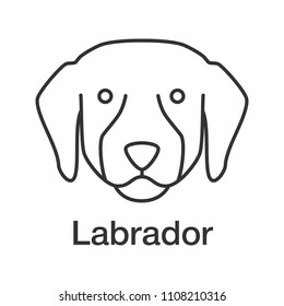 labrador retriever color icon lab guide stock illustration Medical Lab Testing labrador retriever linear icon lab thin line illustration guide dog breed contour