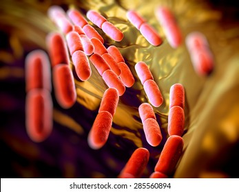 Lactobacillus bacteria. This lactic acid-producing bacteria is used in the production of yoghurt and other fermented products.they serve a protective role against more dangerous bacteria.