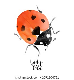 Ladybird watercolor isolated hand drawn illustration