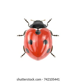 Ladybug on white. 3D illustration