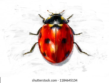 LADYBUG SKETCH / OIL COLOR PAINTING