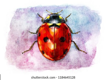 LADYBUG SKETCH / WATER COLOR PAINTING