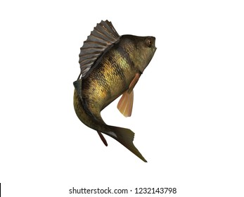 Lake perch fish back view 3d render isolated