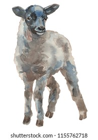 The lamb, yeanling. Hand painted, isolated on white background watercolor illustration.