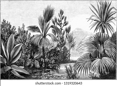 Landscape of the Eocene Era in Aix en Provence, vintage engraved illustration. From the Universe and Humanity, 1910.