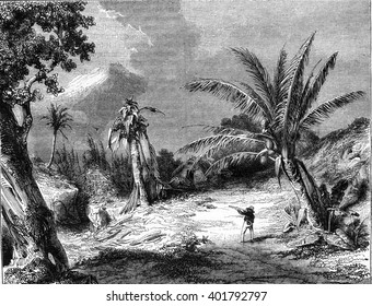 Landscape in Guadeloupe, vintage engraved illustration. Magasin Pittoresque 1847.