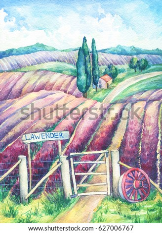 Landscape Provence Colorful Blooming Lavender Fields Stock