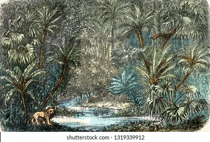 Landscape of tropical regions, vintage engraved illustration. From Natural Creation and Living Beings.