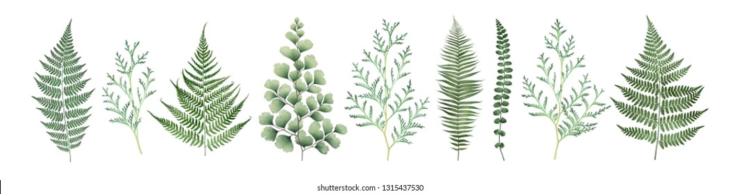 Large collection of floral elements isolated on white background. Watercolor botanical illustration.