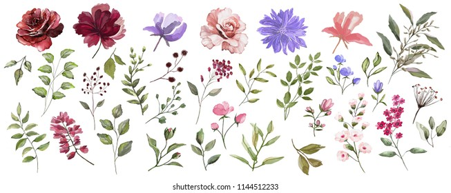 Large flower set: Burgundy,pink, blue flowers.  Watercolor illustration. Botanical collection of wild and garden plants. Set: leaves flowers, branches,buds, seeds and other natural elements.