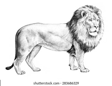Lion Sketch Images Stock Photos Vectors Shutterstock Buy female lion laying down looking around by nicbob90 on videohive. https www shutterstock com image illustration large male lion standing majestic side 283686329