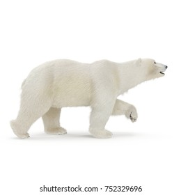 Large male Polar bear walking on a white. 3D illustration