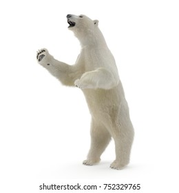 Large male White Bear Standing Pose on a white. 3D illustration