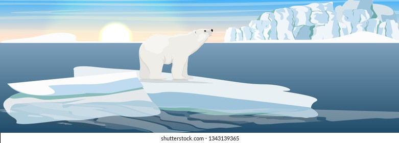 Large polar bear on an ice floe drifting in a cold northern ocean. The glacier and the snow-covered plains and the cold blue sea. Landscapes of the Antarctic.