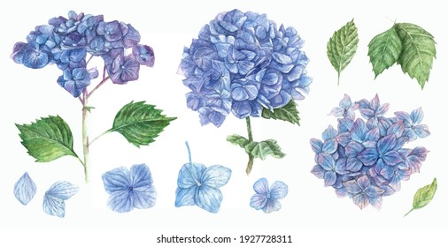 Large set of clouds of blue hydrangea flowers and leaves. Isolated elements hand-drawn in watercolor.