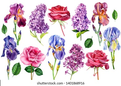 large set of flowers, irises, roses and lilac on an isolated white background, watercolor painting, botanical illustration, wedding card, summer plants
