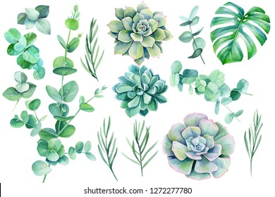 large set of green leaves and branches on a white background tropical plants, watercolor illustration, botanical painting eucalyptus, lavender, monstera, succulent echeveria