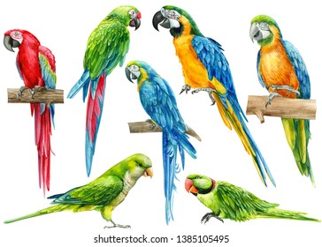 large set of parrots, birds on an isolated white background, watercolor illustration, hand drawing